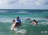 Avis séjour surf en Guadeloupe