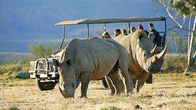 Votre séjour combine un safari avec nuit en logde et stage de surf dans la région de Cape Town