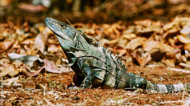 Découverte de la faune locale, lors d'excursions prévues pendant votre séjour VIP surf et activités au Costa Rica