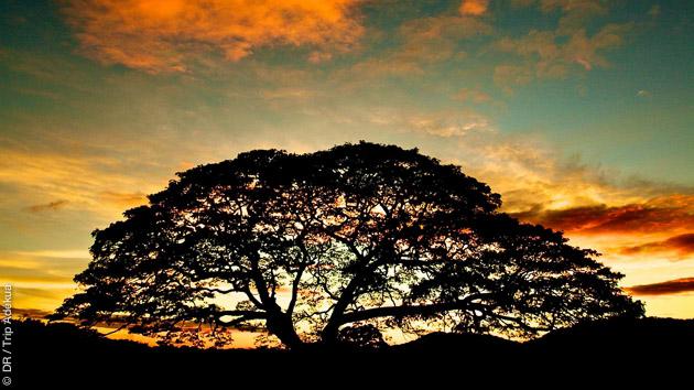Cadre de rêve pour séjour au paradis  : coaching surf au Costa Rica, avec des activités découvertes sur mesure