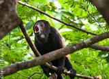 Découvrez le véritable Costa Rica grâce à ce surfari - voyages adékua