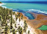 Des spots de surf et un tas d'activités à Praia do Forte! - voyages adékua