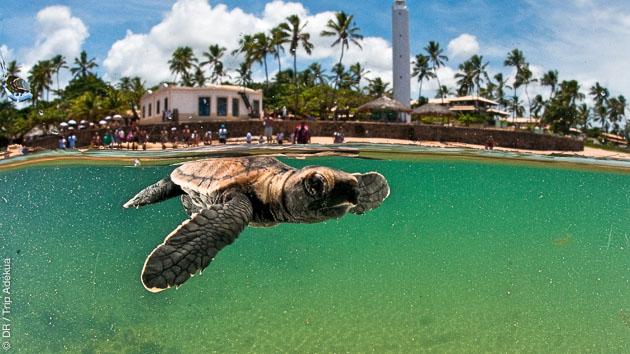 A Praia do Forte, point de danger ! Et du bon surf avec les tortues !
