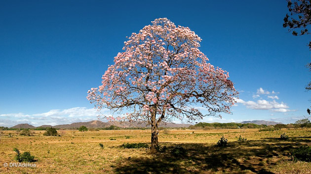 pura vida, la nature préservée au Costa Rica