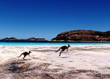 Jours 1 à 2 :  Vos vacances surf commencent par la visite de Sydney - voyages adékua