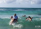 6 journées de surf taxi avec votre agent local expert surf en Guadeloupe - voyages adékua